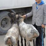 """Keski-Aasiassa yhä useampi """"kadonnut lammas"""" löytää Jeesuksen luo"""