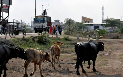 'Lehmävigilantistit' teloittivat kristityn miehen Intiassa